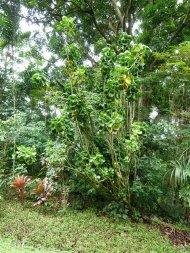 rośliny rosnące w ogrodzie